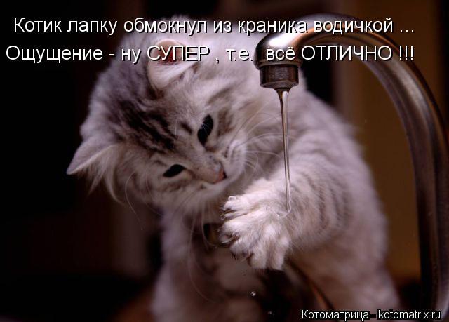 Котоматрица: Котик лапку обмокнул из краника водичкой ... Ощущение - ну СУПЕР , т.е.  всё ОТЛИЧНО !!!