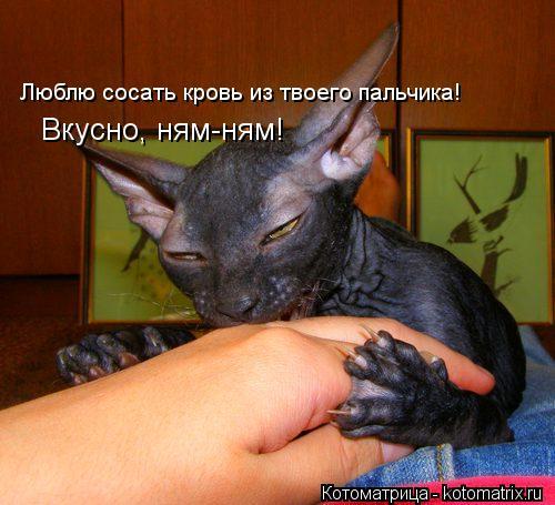 Котоматрица: Люблю сосать кровь из твоего пальчика! Вкусно, ням-ням! Вкусно, ням-ням!