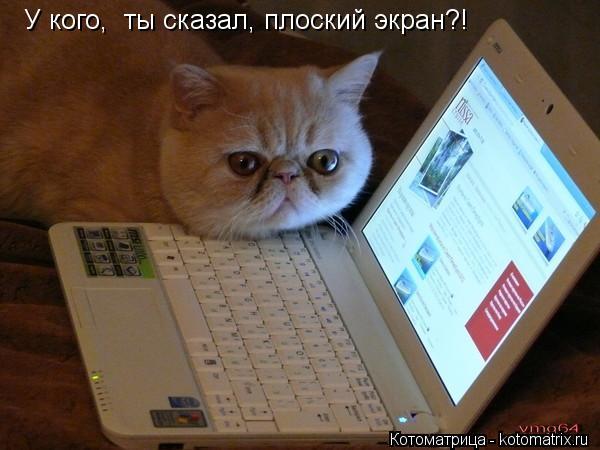 Котоматрица: У кого,  ты сказал, плоский экран?!