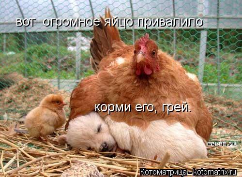 Котоматрица: вот  огромное яйцо привалило корми его, грей.