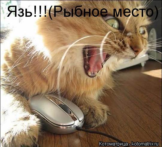 Котоматрица: Язь!!!(Рыбное место)