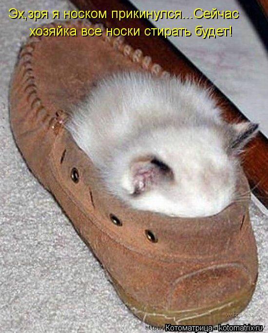 Котоматрица: Эх,зря я носком прикинулся...Сейчас хозяйка все носки стирать будет!
