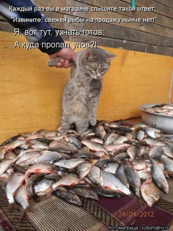 """Котоматрица: Каждый раз вы в магазине слышите такой ответ: """"Извините, свежей рыбы на продажу нынче нет!"""" Я, вот тут, узнать готов: А куда пропал улов?!"""