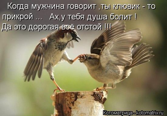 Котоматрица: Когда мужчина говорит ,ты клювик - то прикрой ... Ах,у тебя душа болит ! Да это дорогая всё отстой !!!