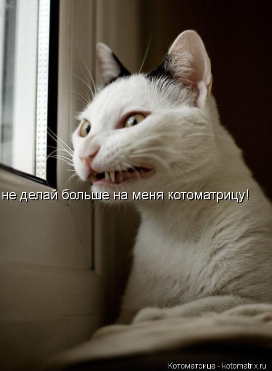 Котоматрица: не делай больше на меня котоматрицу!
