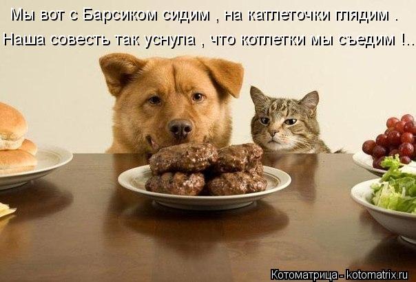 Котоматрица: Мы вот с Барсиком сидим , на катлеточки глядим . Наша совесть так уснула , что котлетки мы съедим !..