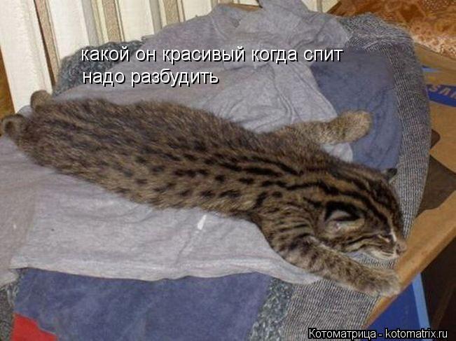 Котоматрица: какой он красивый когда спит надо разбудить