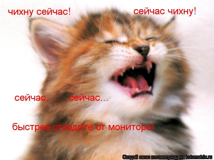Котоматрица: чихну сейчас!  сейчас чихну! сейчас, ....  сейчас... быстрее отходите от монитора!