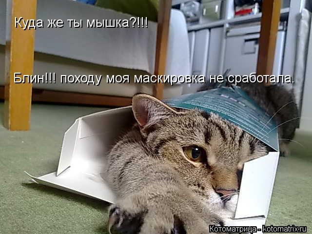 Котоматрица: Куда же ты мышка?!!! Блин!!! походу моя маскировка не сработала.