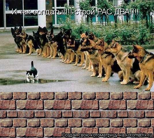 Котоматрица: И так солдаты!!!! строй РАС ДВА!!!!