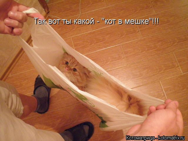 """Котоматрица: Так вот ты какой - """"кот в мешке""""!!!"""