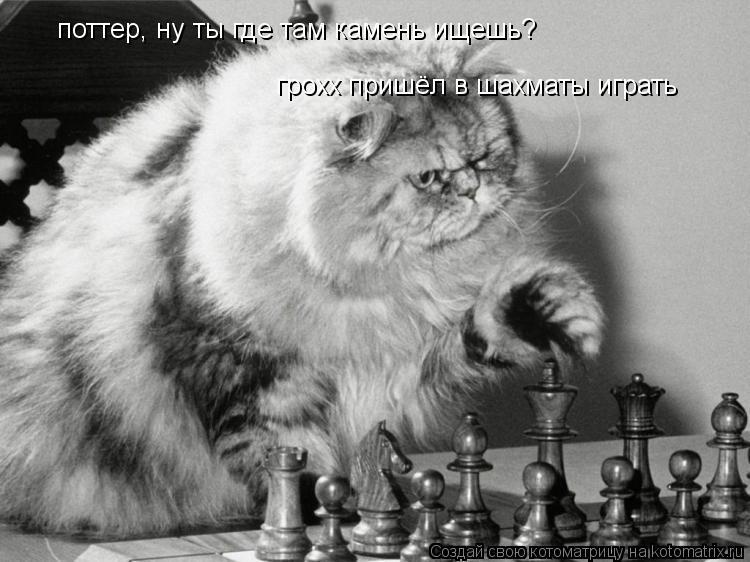 Котоматрица: поттер, ну ты где там камень ищешь? грохх пришёл в шахматы играть