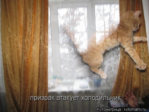 Котоматрица: призрак атакует холодильник