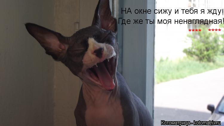 Котоматрица: НА окне сижу и тебя я жду ! Где же ты моя ненаглядная! **** ****