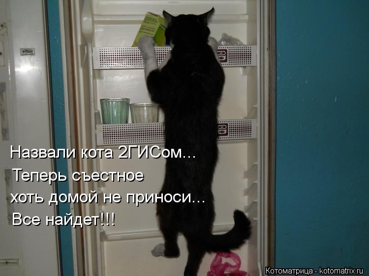 Котоматрица: Назвали кота 2ГИСом...   Теперь съестное хоть домой не приноси - найдет все!!! Назвали кота 2ГИСом...    Теперь съестное  хоть домой не приноси... В