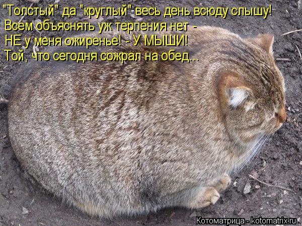 """Котоматрица: """"Толстый"""" да """"круглый"""" весь день всюду слышу! Всем объяснять уж терпения нет - НЕ у меня ожиренье! - У МЫШИ! Той, что сегодня сожрал на обед..."""