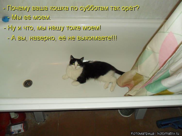 Котоматрица: - Почему ваша кошка по субботам так орёт?   - Мы её моем. - Ну и что, мы нашу тоже моем!  - А вы, наверно, её не выжимаете!!!