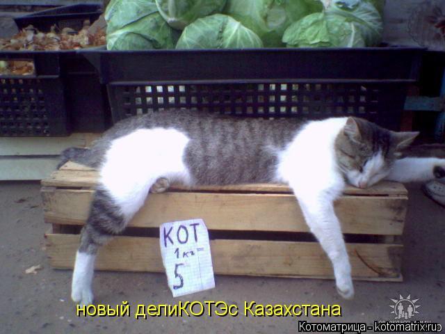 Котоматрица: новый делиКОТЭс Казахстана