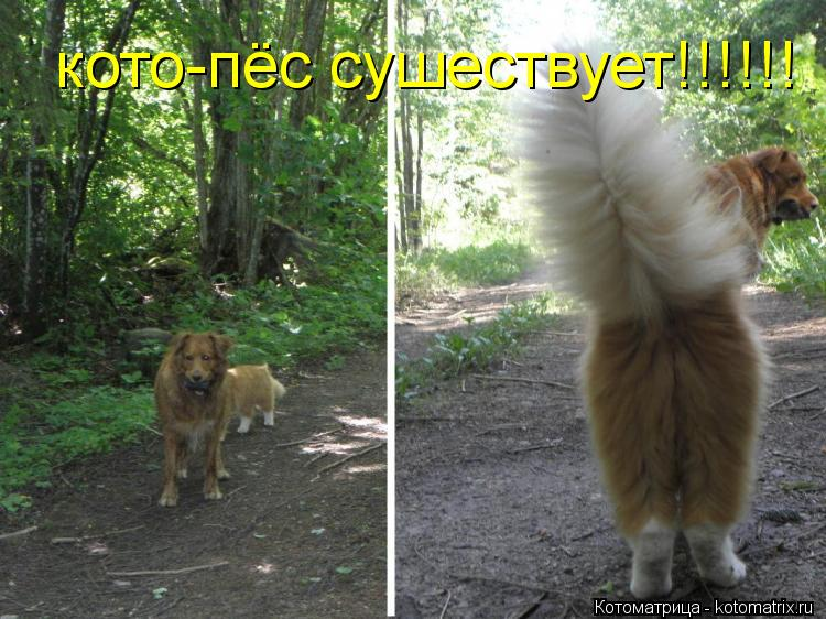 Котоматрица: кото-пёс сушествует!!!!!!