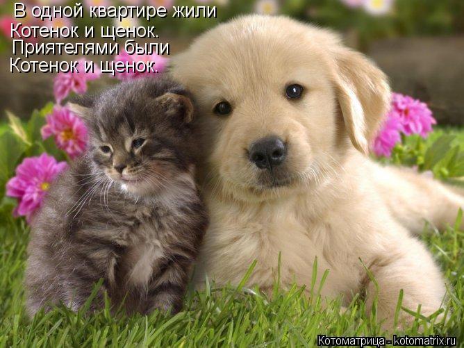 Котоматрица: В одной квартире жили Котенок и щенок. Приятелями были Котенок и щенок.