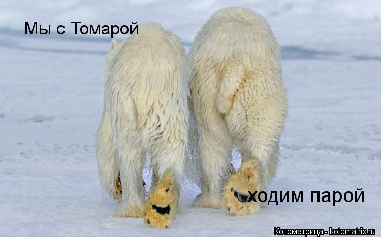 Котоматрица: Мы с Томарой ходим парой