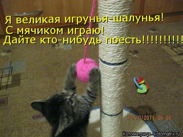 Котоматрица: Я великая игрунья-шалунья! С мячиком играю! Дайте кто-нибудь поесть!!!!!!!!!!!!