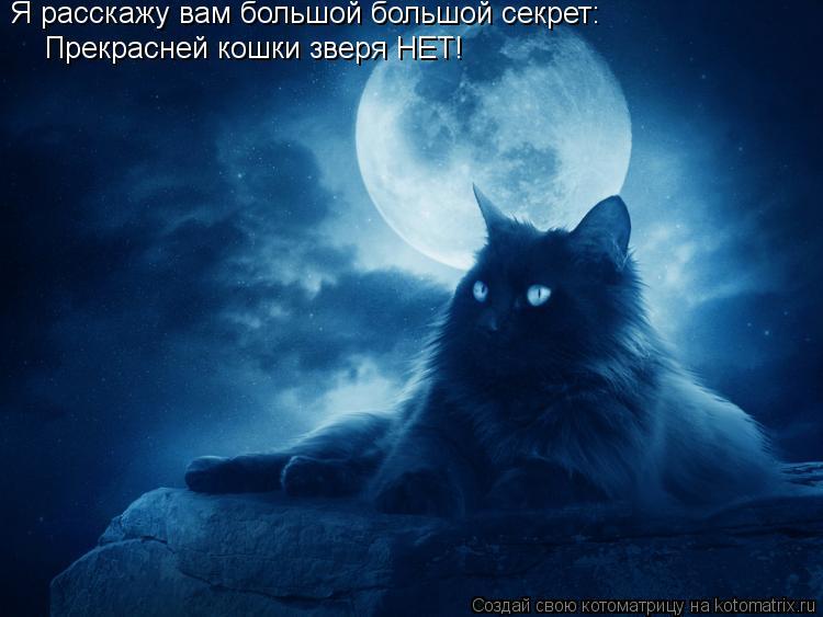 Котоматрица: Я расскажу вам большой большой секрет: Прекрасней кошки зверя НЕТ!