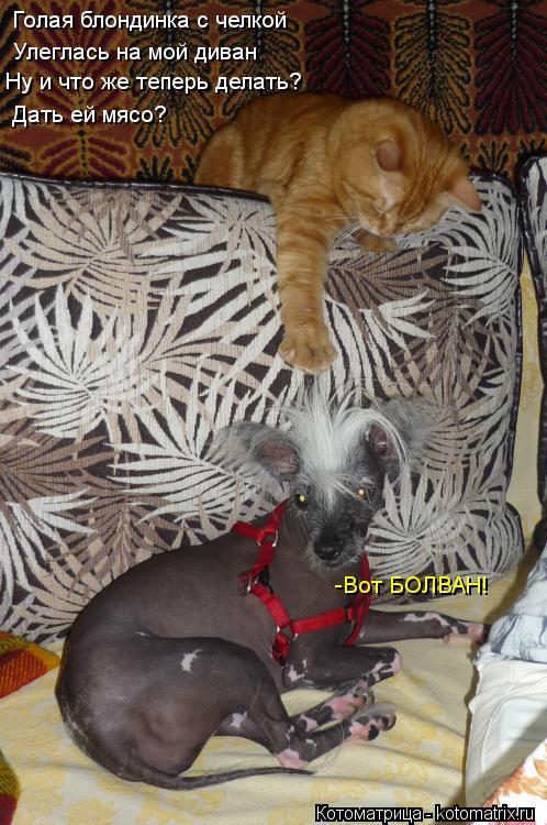 Котоматрица: Голая блондинка с челкой  Улеглась на мой диван Ну и что же теперь делать? Дать ей мясо? -Вот БОЛВАН!