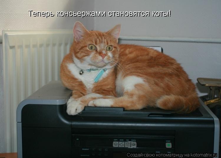 Котоматрица: Теперь консьержами становятся коты!