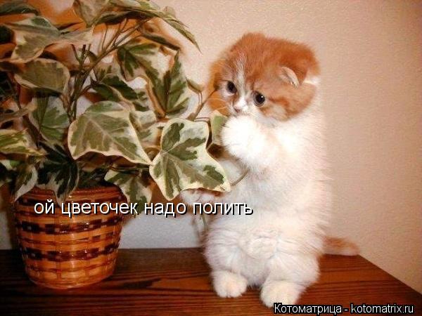 Котоматрица: ой цветочек надо полить