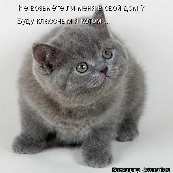 Котоматрица: Не возьмёте ли меня в свой дом ? Буду классным я котом ...