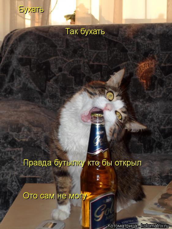 Котоматрица: Бухать Так бухать Правда бутылку кто бы открыл Ото сам не могу