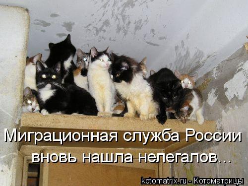 Котоматрица: Миграционная служба России  вновь нашла нелегалов...