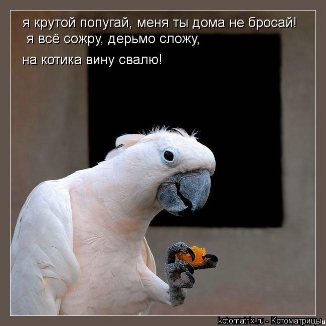 Котоматрица: я крутой попугай, меня ты дома не бросай! я всё сожру, дерьмо сложу, на котика вину свалю!