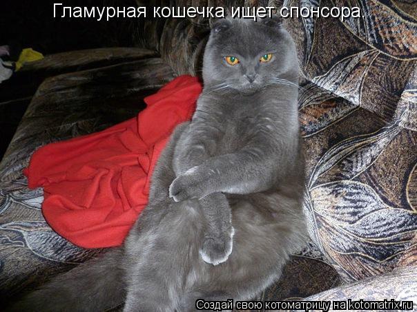 Котоматрица: Гламурная кошечка ищет спонсора.