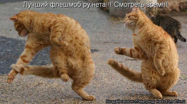 Котоматрица: Лучший флешмоб ру.нета!!! Смотреть всем!!!