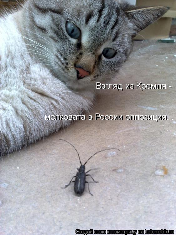 Котоматрица: Взгляд из Кремля -  мелковата в России оппозиция...