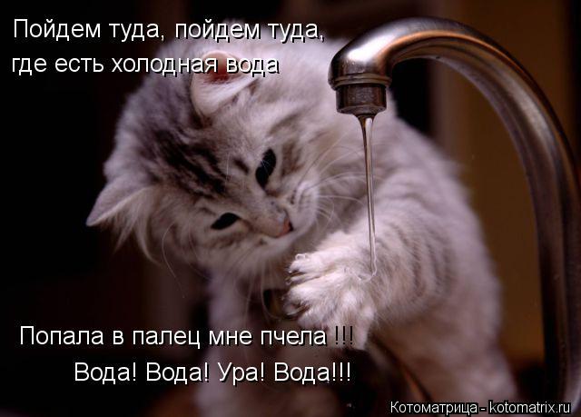 Котоматрица: где есть холодная вода Попала в палец мне пчела !!! Вода! Вода! Ура! Вода!!! Пойдем туда, пойдем туда,