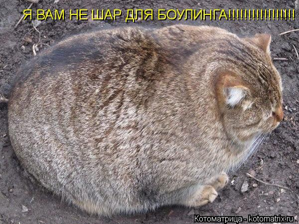 Котоматрица: Я ВАМ НЕ ШАР ДЛЯ БОУЛИНГА!!!!!!!!!!!!!!!!!