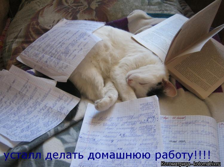 Котоматрица: усталл делать домашнюю работу!!!!
