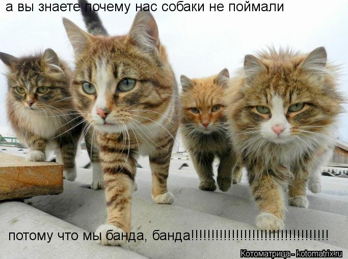Котоматрица: а вы знаете почему нас собаки не поймали потому что мы банда, банда!!!!!!!!!!!!!!!!!!!!!!!!!!!!!!!!!!