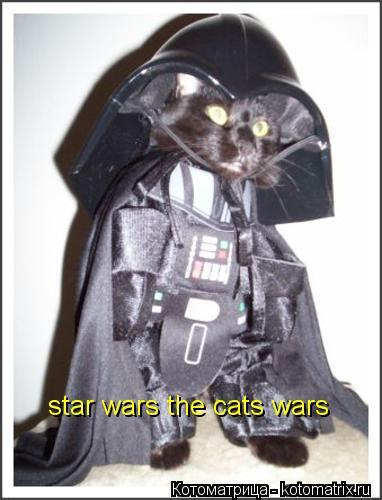 Котоматрица: star wars the cats wars
