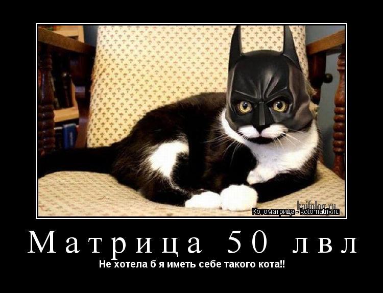 Котоматрица: Матрица 50 лвл Не хотела б я иметь себе такого кота!!