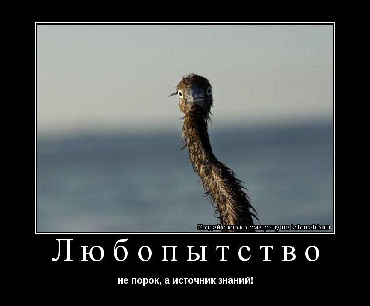 Котоматрица: Любопытство не порок, а источник знаний!