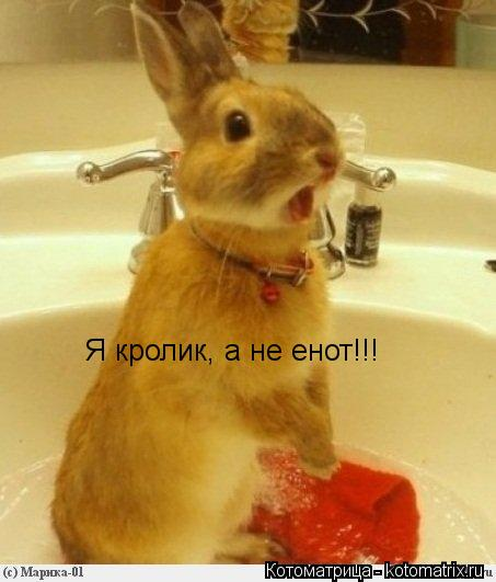 Котоматрица: Я кролик, а не енот!!!