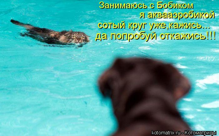 Котоматрица: Занимаюсь с Бобиком  я аквааэробикой сотый круг уже,кажись... да попробуй откажись!!!