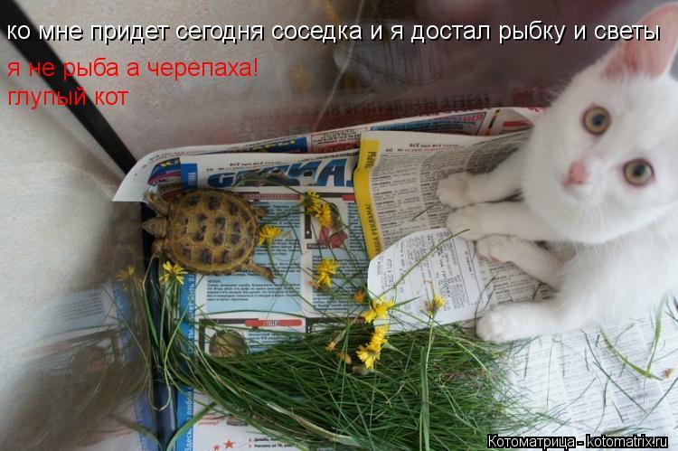 Котоматрица: ко мне придет сегодня соседка и я достал рыбку и светы я не рыба а черепаха! глупый кот