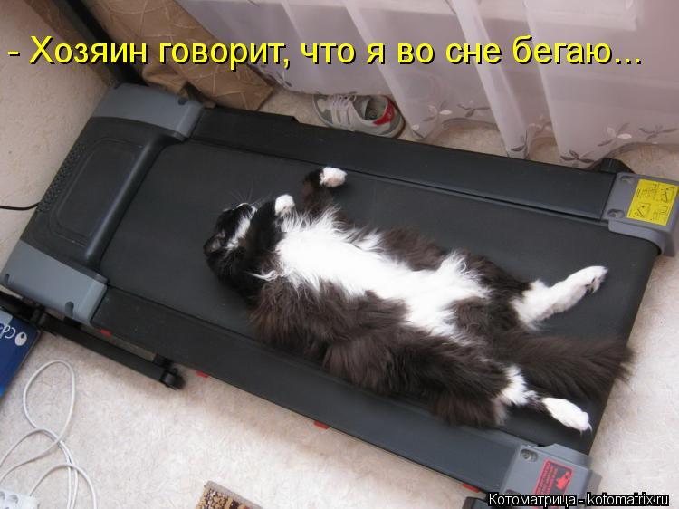 Котоматрица: - Хозяин говорит, что я во сне бегаю...
