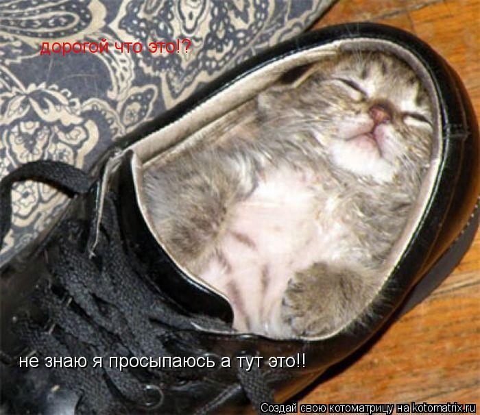 Котоматрица: дорогой что это!? не знаю я просыпаюсь а тут это!!