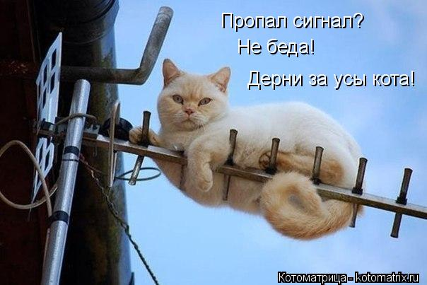 Котоматрица: Пропал сигнал? Пропал сигнал? Не беда! Дерни за усы кота!